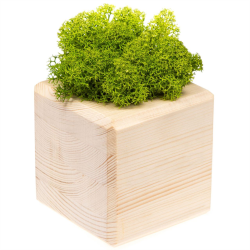 Декоративная композиция GreenBox Wooden Cube, зеленый